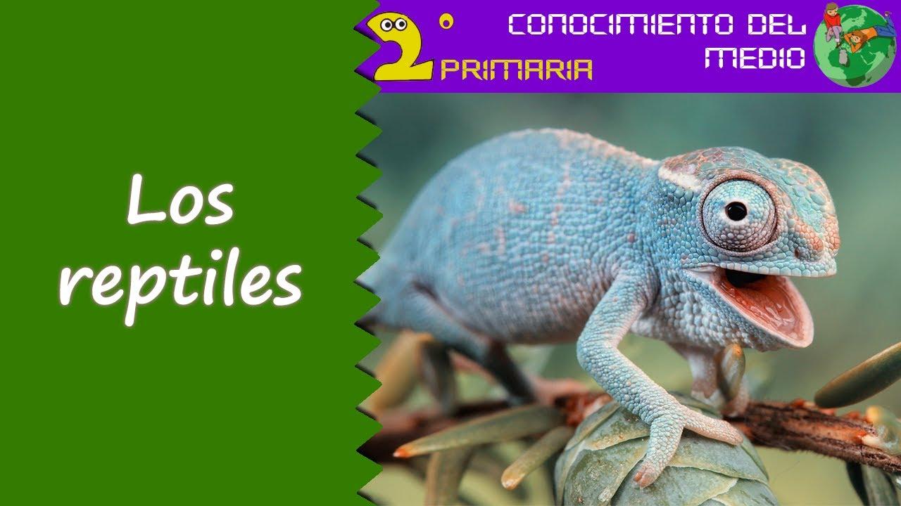 Cono 2º Primaria Tema 5 Los reptiles YouTube