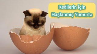 Kediler için yumurta