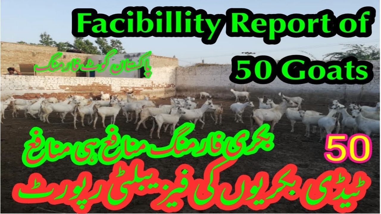 Facibillity Report of Goat Farming | latest Updates for 50 Taddy Goats |  Goat farming Benefits