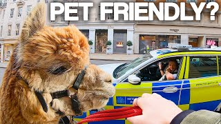"""We tested """"PET FRIENDLY"""" Shops with Alpacas"""