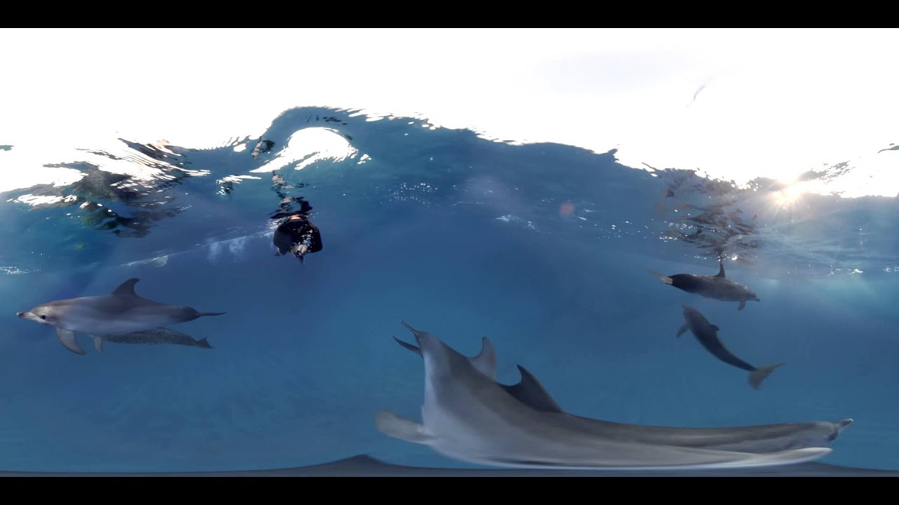 VR Dolphin Experience | Dolphin Project