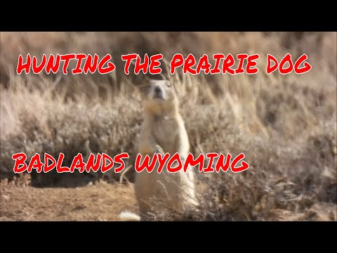 Prairie Dog Hunting With A CANON ESO R6      #jailbreakoverlander
