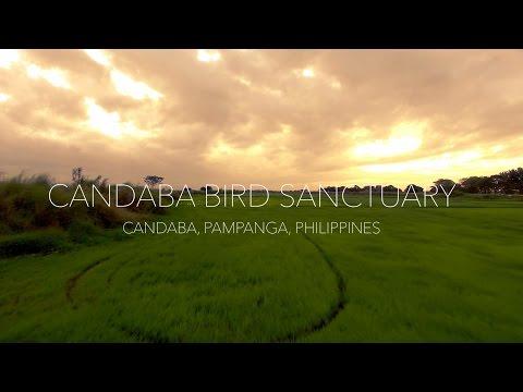 Candaba Bird Sanctuary 4K