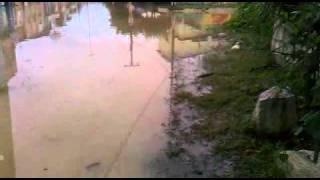 Enchente Escada-Pernambuco 2011