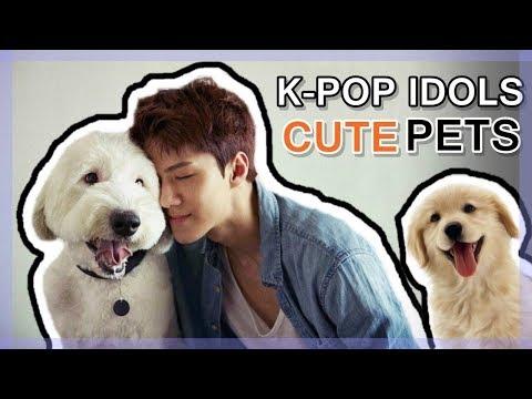 K-POP IDOLS VS. PETS