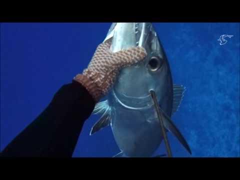 Spearfishing French Polynesia Oct/Nov 2K16