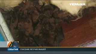 видео Летучие мыши поселились в жилом доме