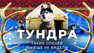 Оленеводы выживание в -50 убийственные щенки и государственные олени Древняя цивилизация Тундры