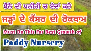 ਏਦਾਂ ਚਲਾਓ ਝੋਨੇ ਦੀ ਰੁਕੀ ਹੋਈ ਪਨੀਰੀ || Do This For Best Growth of Paddy Nursery