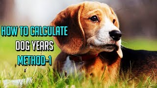 How To Calculate Dog Years || Method-1 || Determining Your Dog's Actual Age || Dog Facts