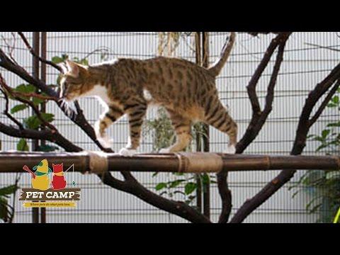 Pet Songs: How To Have Fun At Cat Safari - Pet Camp