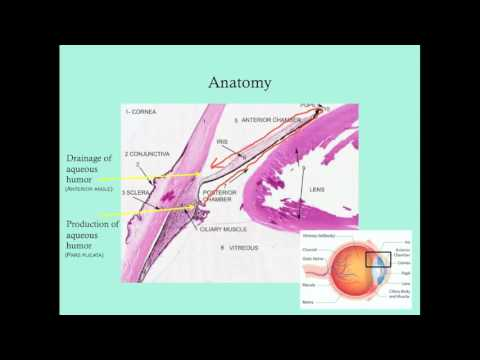 Glaucoma - CRASH! Medical Review Series