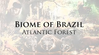 Atlantic Forest - Animals and Nature
