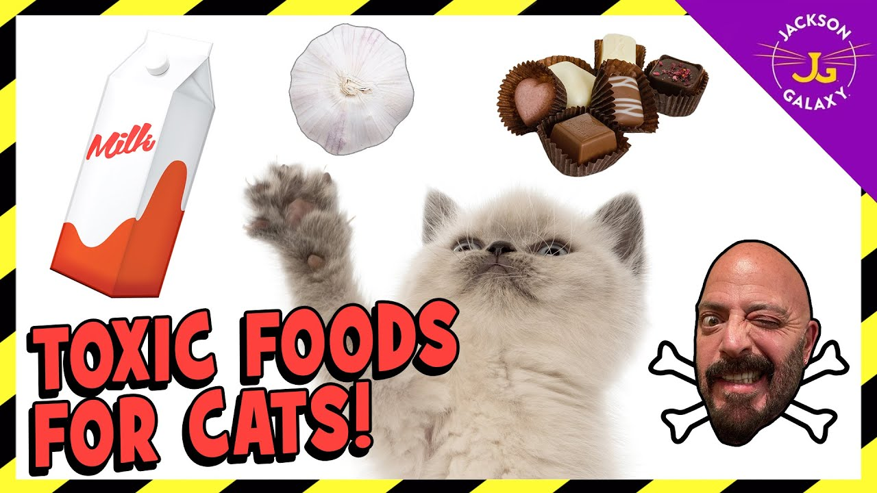 FOODS THAT ARE TOXIC TO CATS!