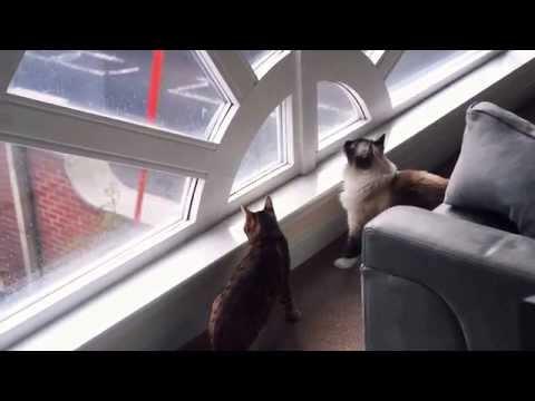 Cats vs. Window Cleaner