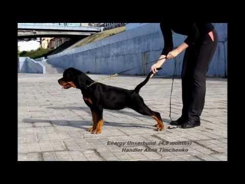 show training Rottweiler puppy Energy Unserbund (4,5 mon)
