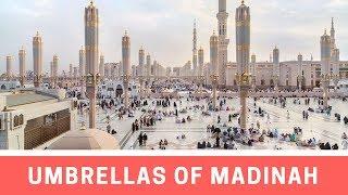 The Umbrellas of the Prophet's Mosque