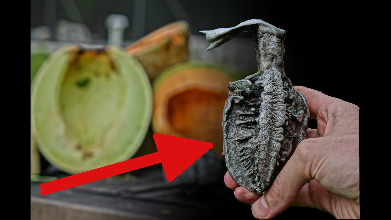 Backyard Scientist Series aluminum vs melons = hand grenade?! - youtube