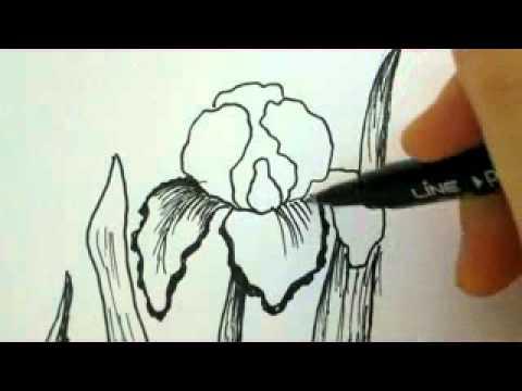 How To Draw Flowers Iris Flower Youtube