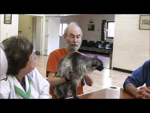 Harry Meekings at the Oriental Cat Seminar 2011