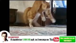 Самые смешные кошки 2014 #3