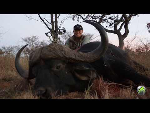Cape Buffalo Hunting With A Bow!