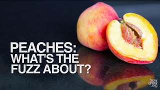 Peaches: What's the Fuzz About?
