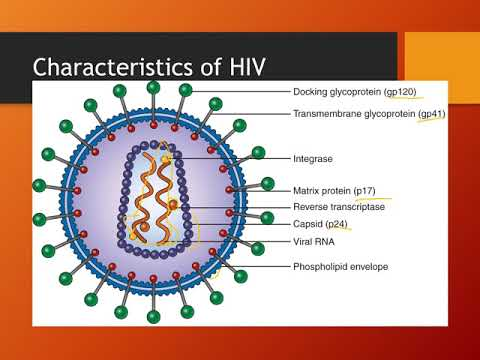 Laboratory Diagnosis of HIV Infection