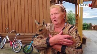 Детёныша косули подобрали жители села Иван-озеро