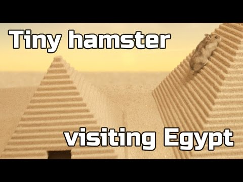 Tiny hamster visiting Egypt ep.2