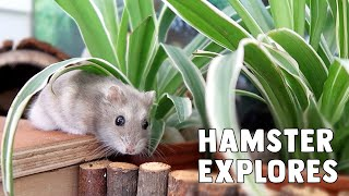 Hamsters In The House Roblox Animal House Pets Online Game Let S Play Random Fun Video Hamster Care Sheet Guide How To Care For Your Hamster Erinsanimals Erinshamsters Youtube Stats Subscriber Count Views Upload Schedule
