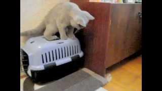 Кот и котенок спустя две недели знакомства