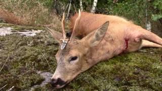 Bukkejakt del 2, Roebuck hunt, bockjagd, rådjursjakt