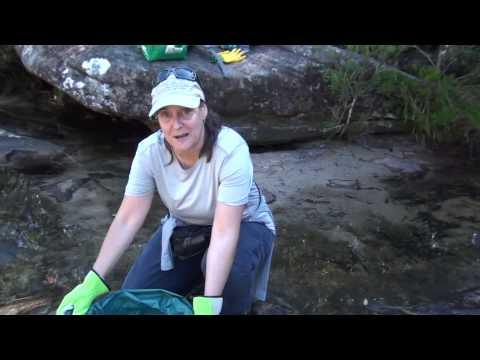 Karloo Pools CleanUp