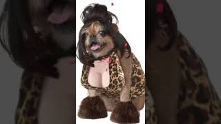🎃 Funny & Cute Cats & Dogs Halloween Costumes Short Compilation 🎃