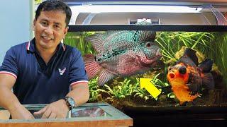 Basic guide for aquarium hobby…
