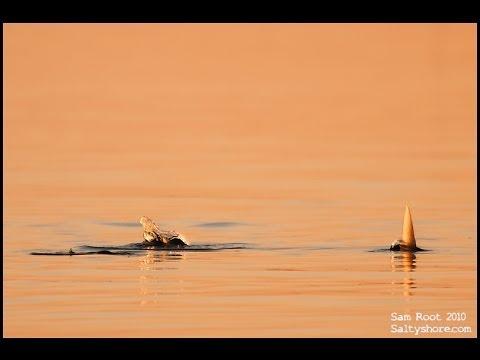 Long Island Bonefish Lodge Bonefish On Fly Via Pivot Head Camera