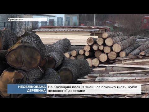 Канал 402: На Прикарпатті поліція знайшла близько тисячі кубів незаконної деревини