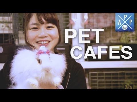 Inside The Pet Cafés Of Japan