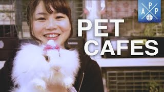 Inside The Pet Cafés Of Japan
