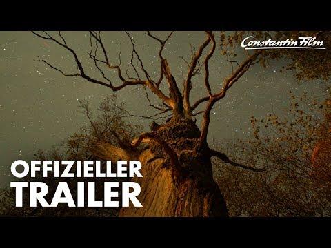 DAS GEHEIME LEBEN DER BÄUME I Offizieller Trailer