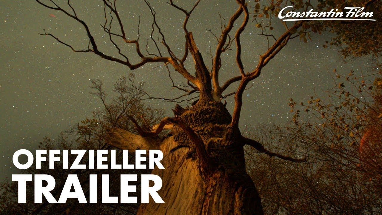 Das Geheime Leben Der Baume I Offizieller Trailer Youtube