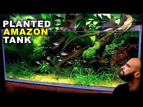 aquascape-tutorial:-epic-4ft-amazon-aquarium-/-planted-tank-(how-to-guide-|-no-co2-|-diy-lighting)