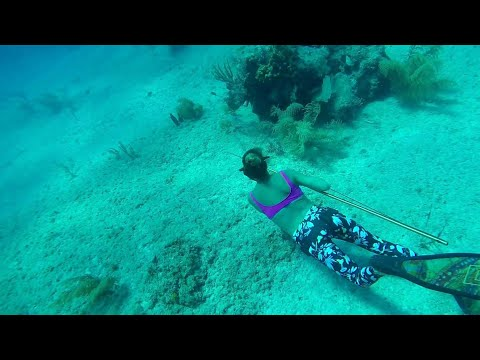 Spearfishing In The Bahamas For Grouper And Hogfish