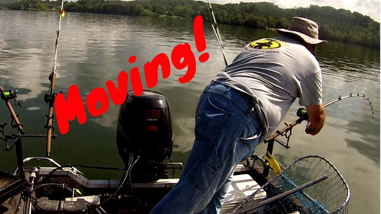 Suspend Drifting for GIANT Flathead Catfish!! - YouTube - photo#42