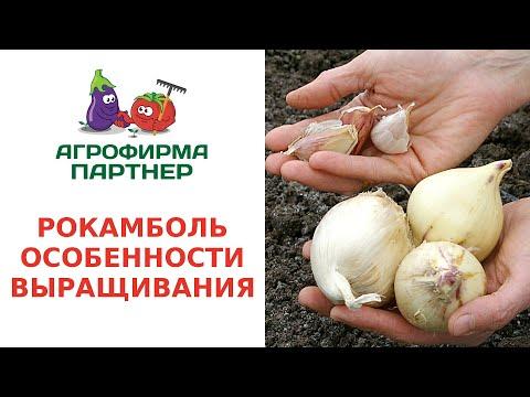Вопрос: Какие особенности есть в выращивании феррарии?