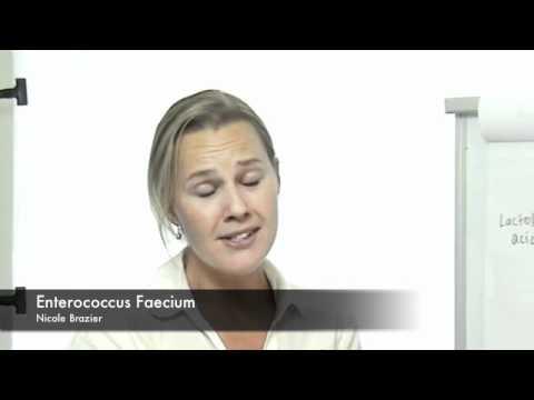 5 Enterococcus Faecium