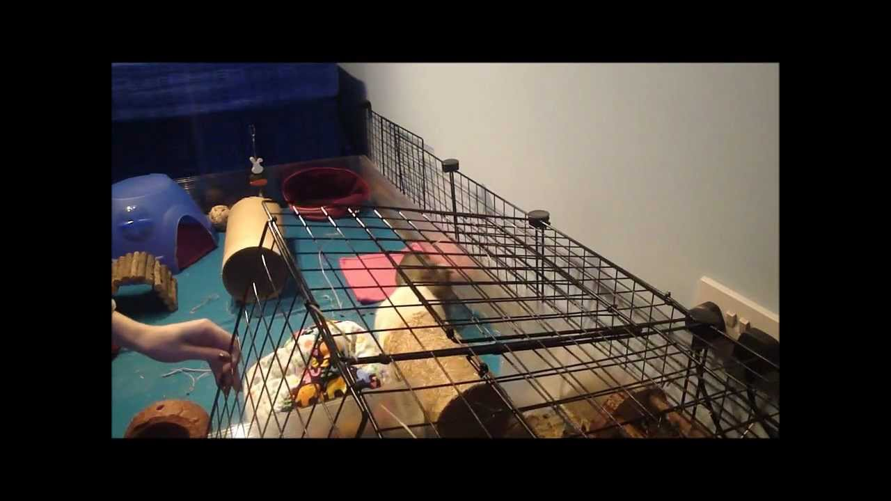 How to make a guinea pig hay room with a creative c c cage for Making a c c cage