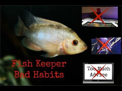 3 Bad Fish Keeper Habits