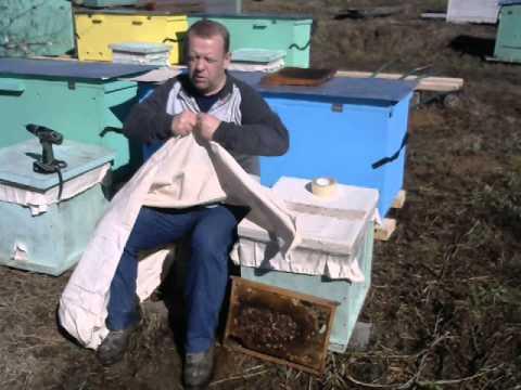 Покупка и перевозка пчёл. Для пасеки на Владимирских ульях лежаках